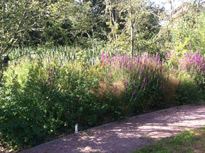 HEC Hereford Landscape Mitigation