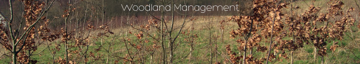 Woodland Management from Heritage Environmental Contractors