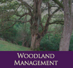 HEC Commercial Woodland Management